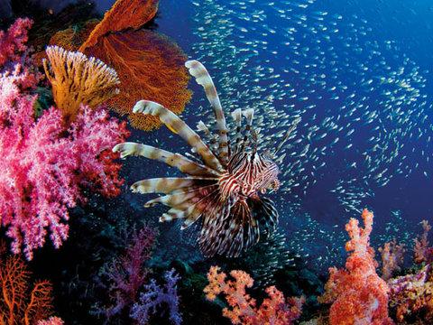 Samui Coral Island Snorkeling Tour