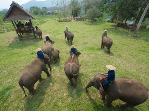 Lao Elephant Camp