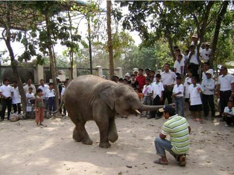 Phnom Tamao Wildlife Tour