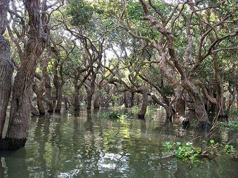 Kompong Phluk Flooded Forest Tour