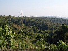 Norng Kabat Forest