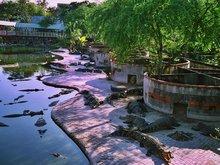 Crocodile Farm and Zoo