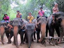 Elephant Village Tour