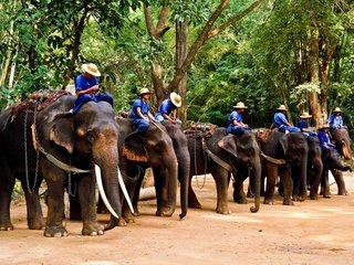 Bangkok - Chiang Mai Elephant Safari and Doi Suthep (B, L)