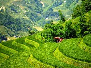 Ta Van - Giang Ta Chai - Ban Ho (B, L, D)