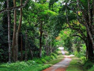 Hanoi - Cuc Phuong National Park (B, L, D)