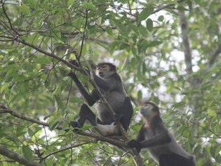 Cat Tien National Park (B, L, D)