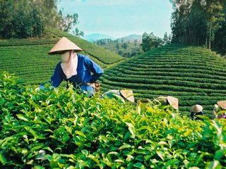 Dalat - Bao Loc - Ho Chi Minh (B, L)