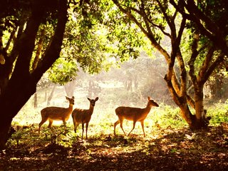 Cuc Phuong National Park (B, L, D)