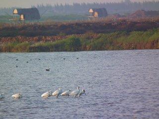 Cuc Phuong – Nam Dinh - Xuan Thuy Ramsar Area (B, L, D)