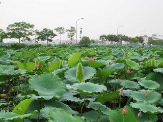 Cat Ba Island – Hai Phong – Hanoi (B, L)