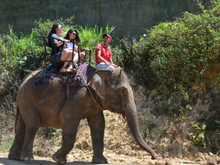 Da Lat Elephant Riding Tour