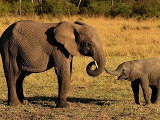 Elephants Safari Tour (B, L)