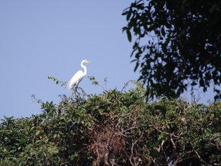 Preak Toal Bird Sanctuary