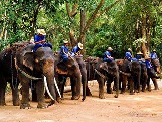 Chiang Mai - Elephant Safari (B, L)