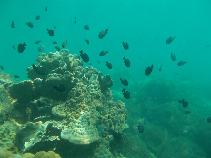 Koh Kong Divers