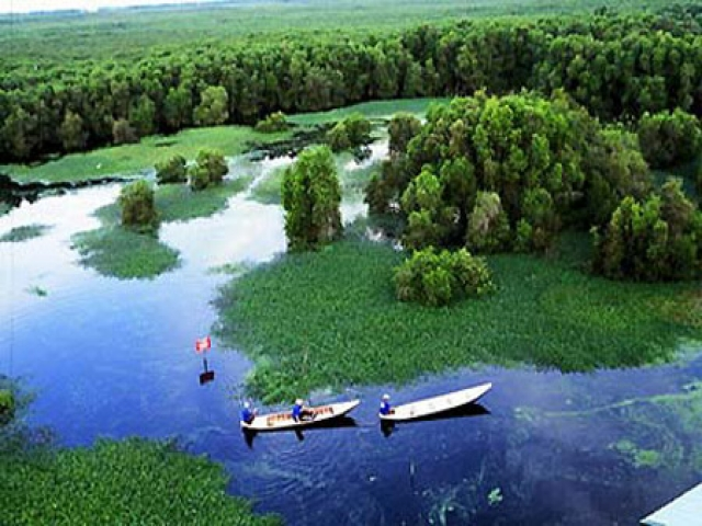 can_gio_mangrove_forest_1_0.jpg